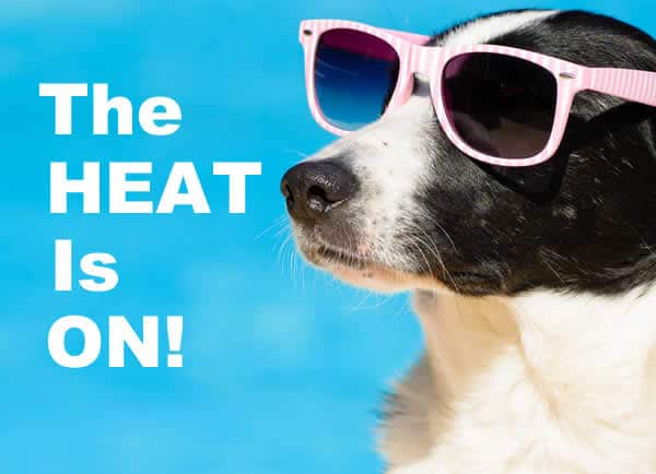 Elgin TX Summer Heat!